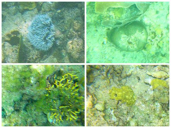 不同色彩的硬珊瑚