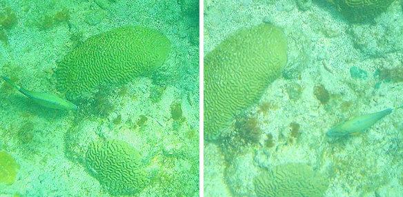 在珊瑚间盘旋的鱼儿