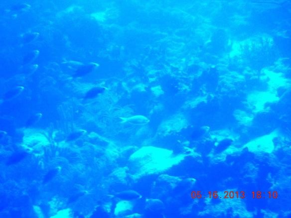 鱼群与珊湖