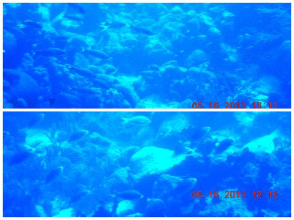 在海底畅游的鱼群