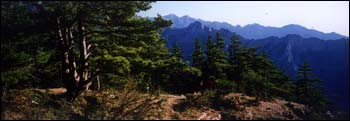 贺兰山森林公园